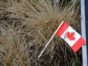 Canadian flag in planter http://kellylmckenzie.com/olympic-moments/