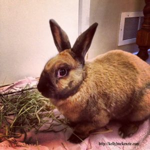 Cute brown rabbit with hay.