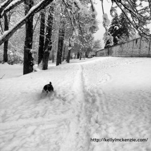 Black and white dog running in snow. http://kellylmckenzie.com/