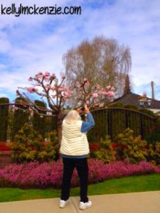 Mom photographing magnolia blossoms http://kellylmckenzie.com/still-blossoming-at-91/